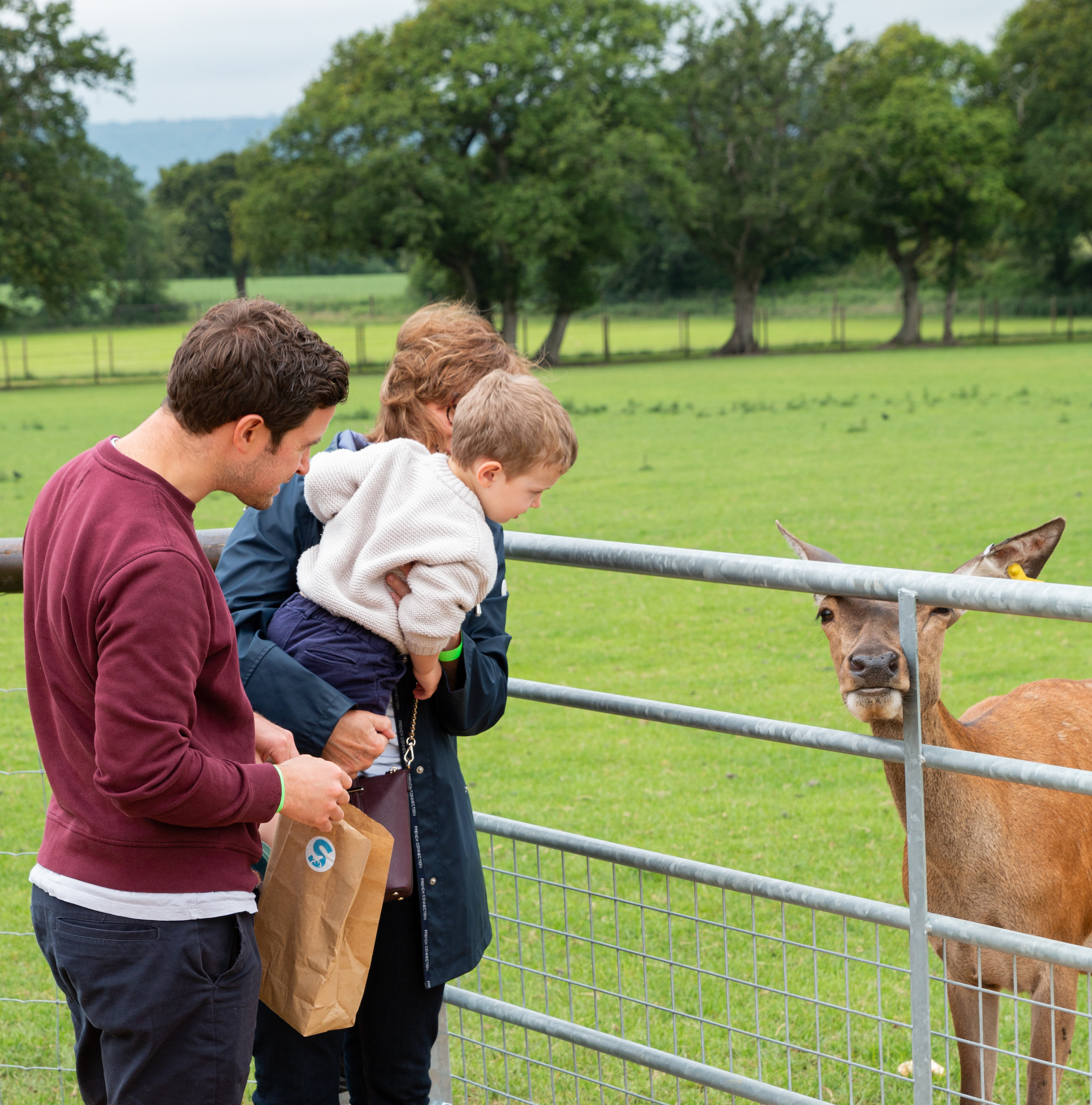 Family feeding the red deer at sky park farm